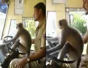 monkey_driving_bus