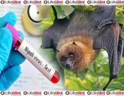 nipah virus, bat