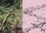 mizoram, bamboo drip irrigation