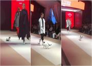 real-catwalk