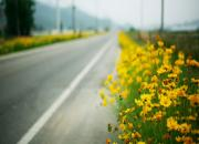 flowers in the roadside
